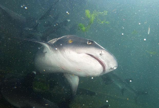 hi-education-shark-opet
