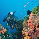 エナダイブセンター 体験ダイビング